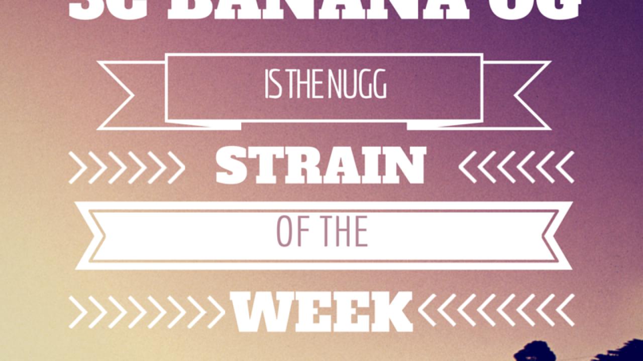 Strain of the Week - Banana OG   Nugg