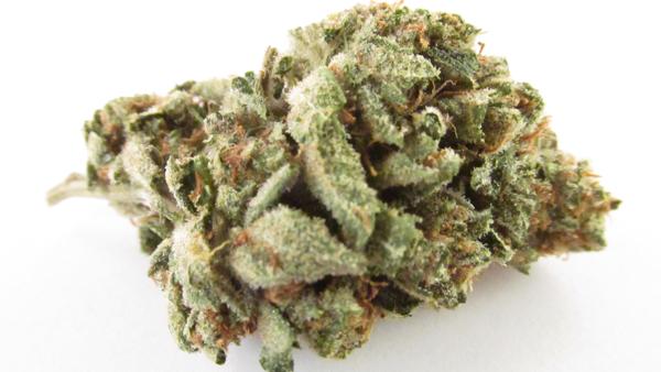 Girl Scout Cookies -- Patient to Patient Medical Marijuana Delivery Service