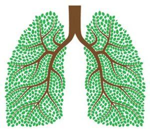mmj and asthma