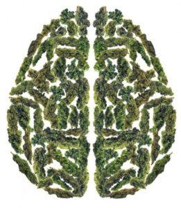 marijuana and memory