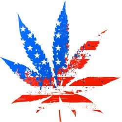 americans support medical cannabis